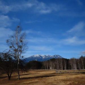 2020年12/11~開田高原の野鳥