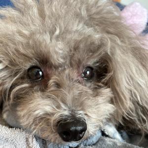 ニコの手作り犬ごはん 1.15-1.17