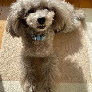ニコの手作り犬ごはん 1.18-1.20