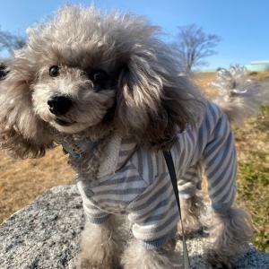 ニコの手作り犬ごはん 1.24-1.26