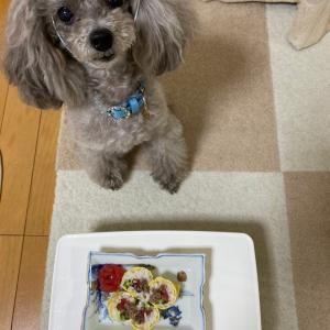 ニコの手作り犬ごはん 2.3-2.4