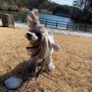 ニコの手作り犬ごはん 2.11-2.12