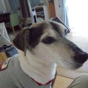 ビビリ犬(ケン)