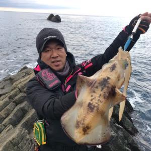 2019/1/4 初釣り冬エギング@西伊豆沖磯