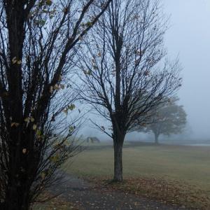 霧の日にキラキラ発見!