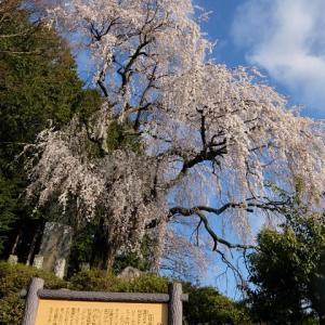 安曇野も桜の季節