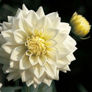 結婚運・家庭運・愛情運をあげたいときにオススメの花はこれ!