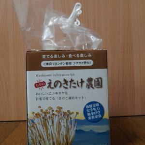 エノキタケの栽培、始めました。