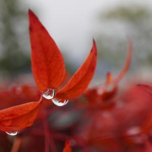 小雨の降る日に・・・・