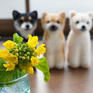 菜の花と三兄弟
