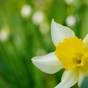 春、4月♪