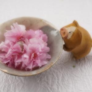 名残りの八重桜 1