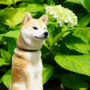 ポチと紫陽花 2