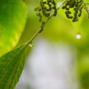 憂鬱な雨の日には・・・・