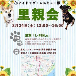 明日の里親会(8/24)に出ます!