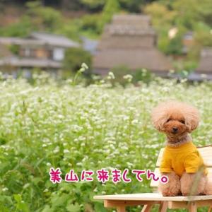 かやぶきの里と蕎麦の花♪