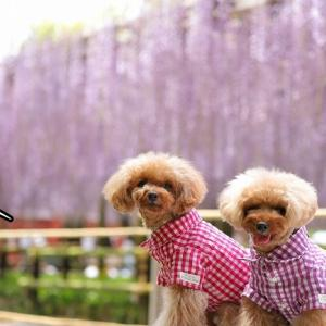 紫のカーテン♪