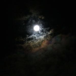 昨夜の満月の中秋の名月は観れましたか。