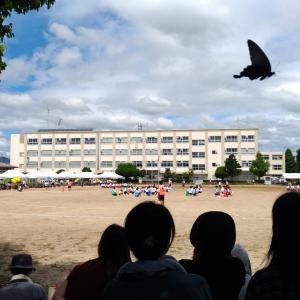 石巻中学校 体育祭