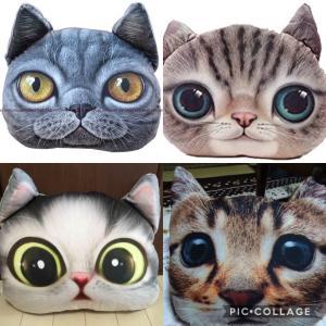 まさにリアル猫クッション‼️
