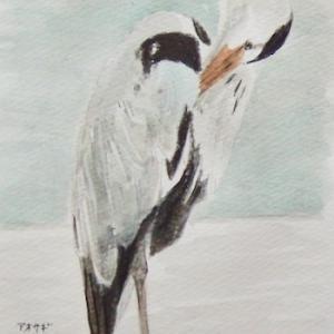 #野鳥スケッチ #ネイチャー・ジャーナル 『青鷺』 Ardea cinerea