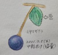 #植物スケッチ #ネイチャー・ジャーナル 『深山桜』Cerasus maximowiczii