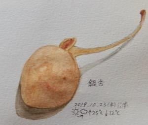 #植物スケッチ #ネイチャー・ジャーナル 『銀杏』