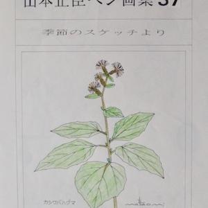 #自然画 『ペン画集』 37