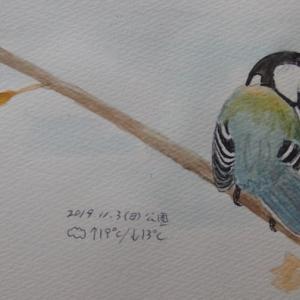 #野鳥スケッチ #ネイチャー・ジャーナル 『四十雀』 Parus minor