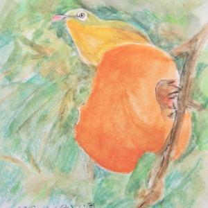 #野鳥スケッチ #ネイチャー・ジャーナル 『目白』 Zosterops japonicus