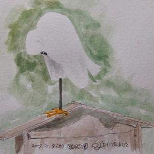 #野鳥スケッチ #ネイチャー・ジャーナル 『小鷺』  Egretta garzetta