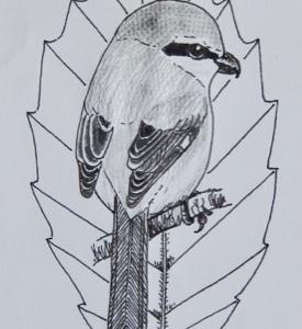 『#木の葉絵 #leafart 』 深山柞・百舌