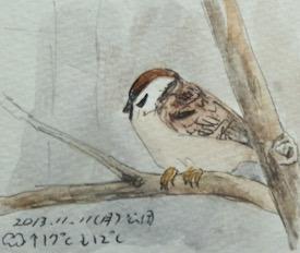 #野鳥スケッチ #ネイチャー・ジャーナル『雀』 Passer montanus