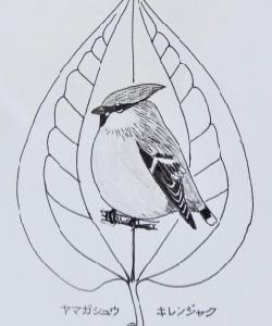 『#木の葉絵 #leafart 』 山何首烏・黄連雀