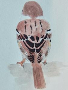 #ネイチャー・スケッチ  #Naturejournal  『雀』  Passer montanus