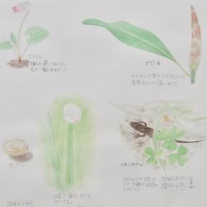 #ネイチャー・スケッチ #Naturejournal #sketch #Watercolo #水彩画 #感察