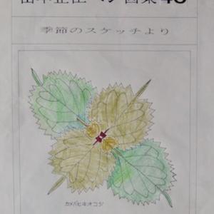 #自然画 『ペン画集』 40