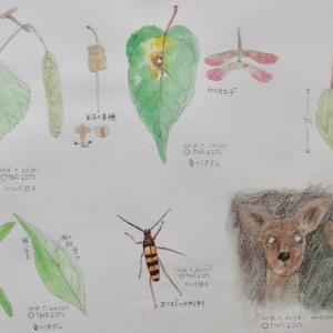 #ネイチャー・スケッチ #Naturejournal #sketch #Watercolo #水彩画 #感察 #植物