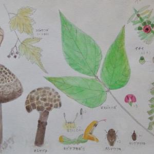 #ネイチャー・スケッチ #Naturejournal #sketch #Watercolo #水彩画 #感察 #植物 #茸 #昆虫