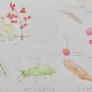 #ネイチャー・スケッチ #Naturejournal #sketch #Watercolo #水彩画 #植物 #昆虫