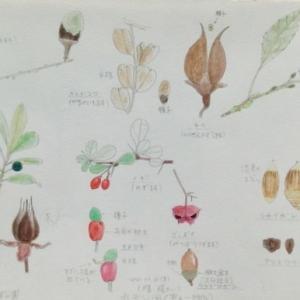 #ネイチャー・スケッチ #Naturejournal #sketch #Watercolo #水彩画 #植物