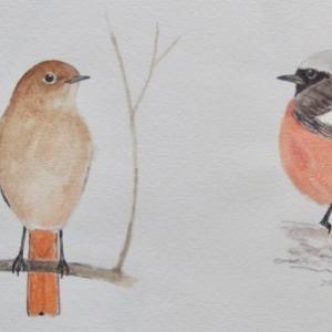 #ネイチャー・スケッチ #Naturejournal #sketch #Watercolor #水彩画 #野鳥
