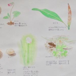 #ネイチャー・スケッチ #Naturejournal #sketch #Watercolor #水彩画 #植物