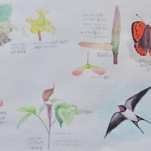 #ネイチャー・スケッチ #Naturejournal #sketch #Watercolor #水彩画 #植物 #野鳥 #昆虫