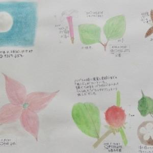 #ネイチャー・スケッチ #Naturejournal #sketch #Watercolor #水彩画 #自然 #植物