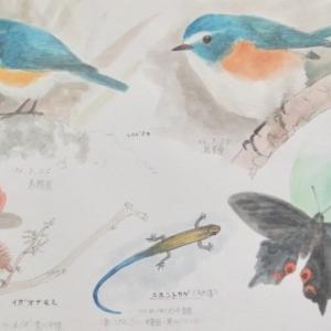 #ネイチャー・スケッチ #Naturejournal #sketch #水彩画 #野鳥 #昆虫 #爬虫類 #植物