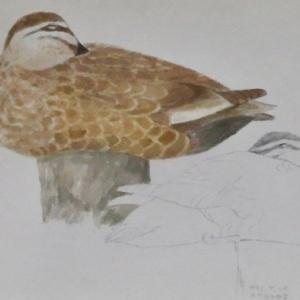 #ネイチャー・スケッチ #Naturesketch #Naturejournal #水彩画 『野鳥』