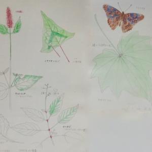 #ネイチャー・スケッチ #Naturesketch #Naturejournal #水彩画 『植物・昆虫』