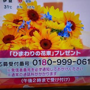 6/16・・・めざましテレビお花プレゼント(本日2時まで)