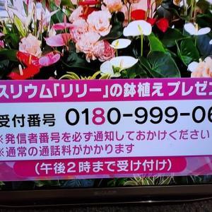6/23・・・めざましテレビお花プレゼント(本日2時まで)